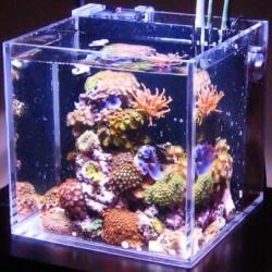 Квадратный морской аквариум (куб)