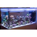 Прямоугольный морской аквариум