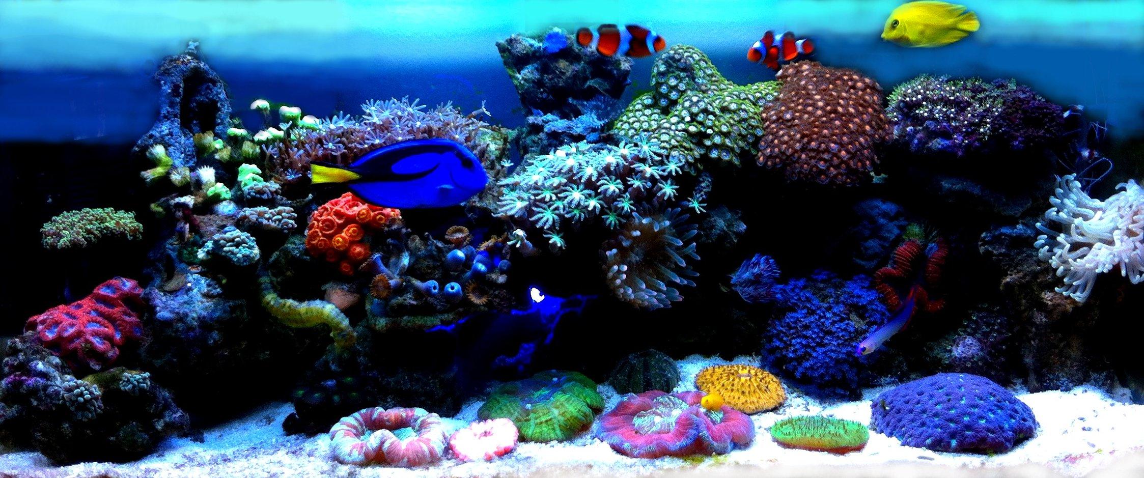 Купить морской аквариум спб